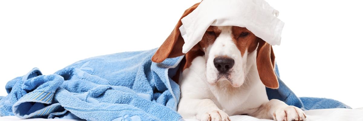 soins vétérinaires chiens